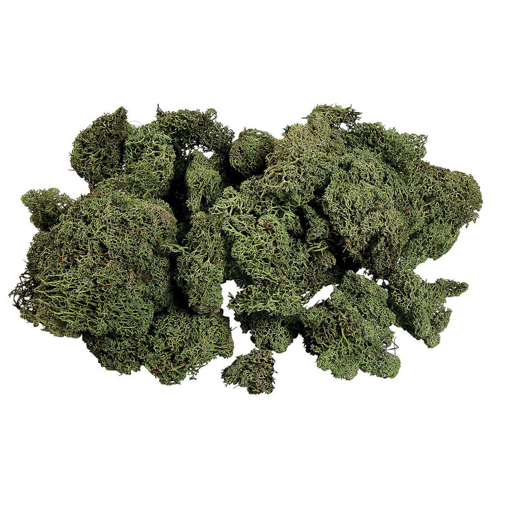 Green Moss from Oriental Trading