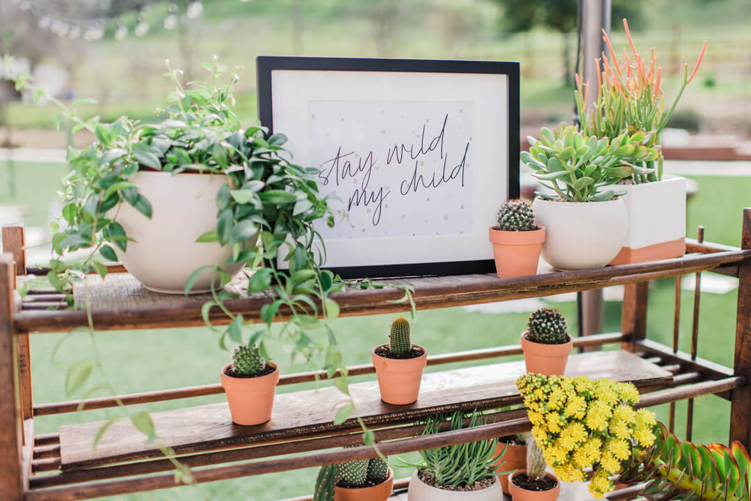 Succulents from Stay Wild, My Child Baby Shower by The Revelry Co | Black Twine